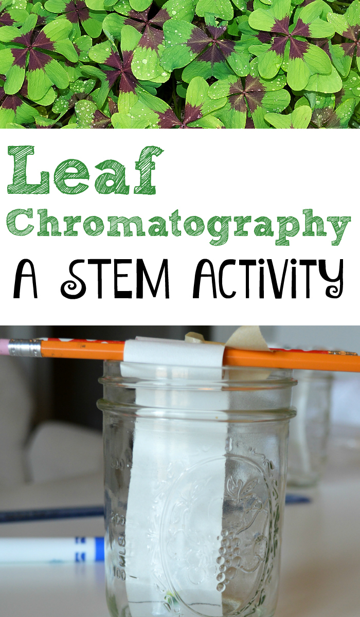 Leaf Chromatography for Kids! Explore chemistry and biology with a single activity.