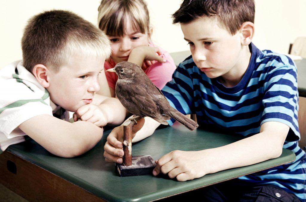 Classes and Tutorials for Homeschoolers