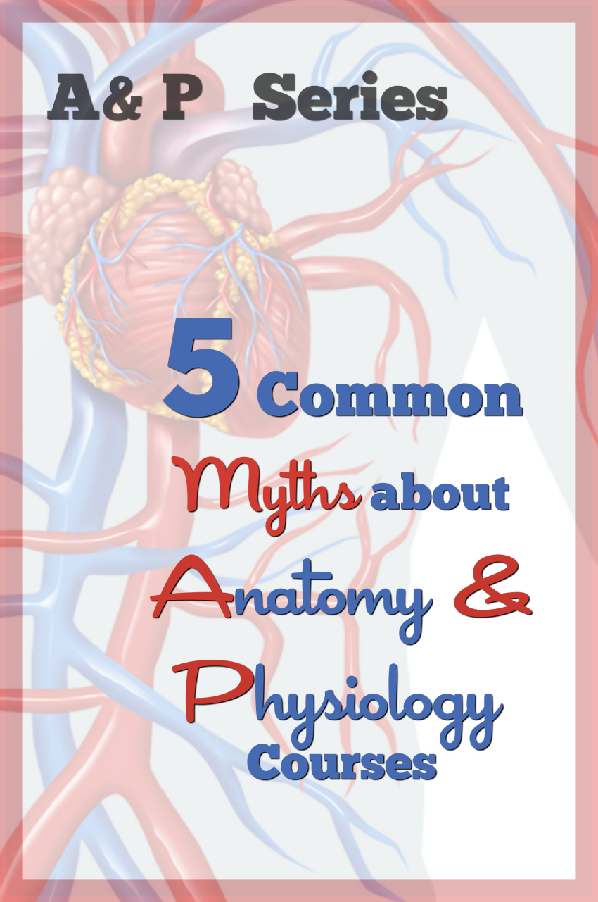 5 common myths about Anatomy & Physiology