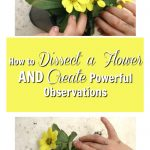 How to Dissect a Flower and Create Powerful Observations