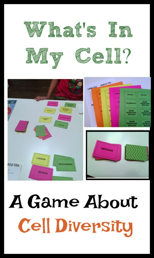 What's In My Cell?