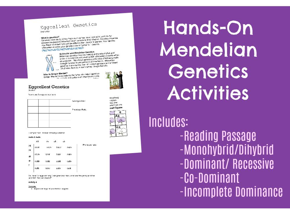 hands on Mendelian Genetics Activities