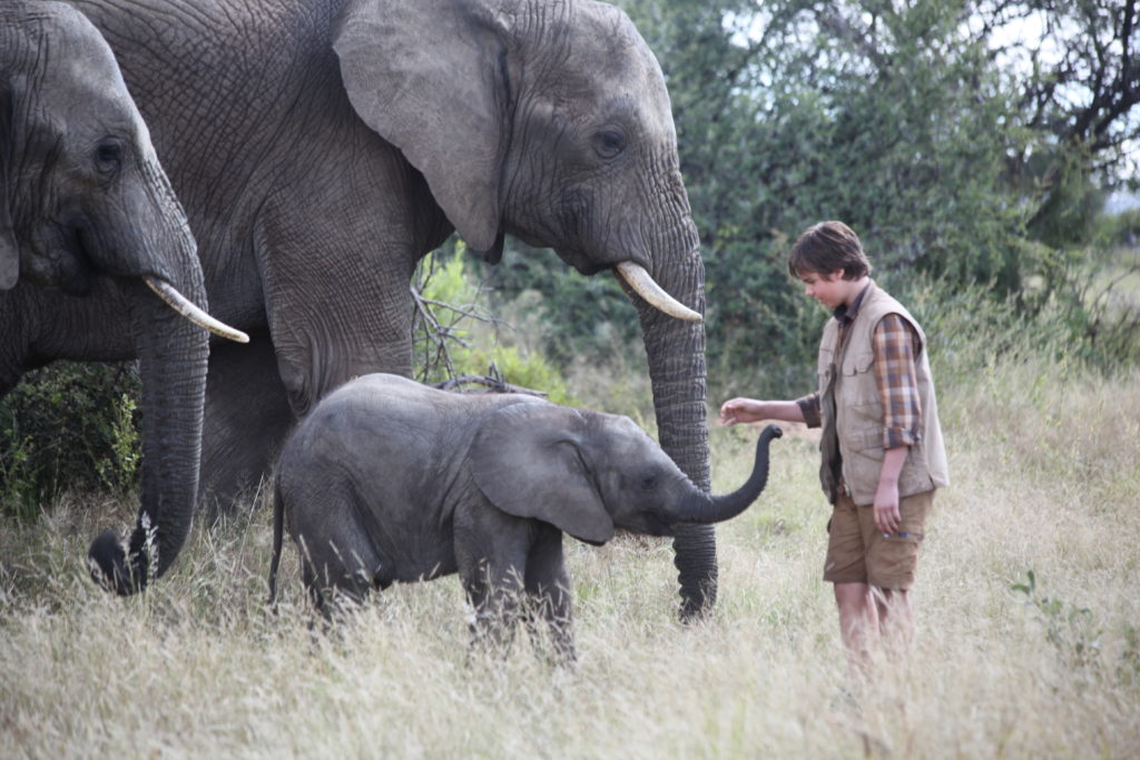 African Elephant Facts for Kids